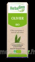 Herbalgem Olivier Macérat Bio 30ml à SAINT-MARTIN-DU-VAR