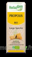 Herbalgem Propolis Large Spectre Solution Buvable Bio Fl Cpte-gttes/15ml à SAINT-MARTIN-DU-VAR